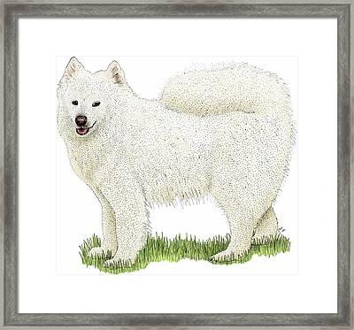 Samoyed Framed Print by Roger Hall