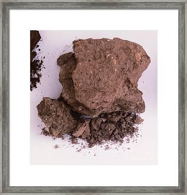 Sample Of Chalk Soil Framed Print by Dorling Kindersley
