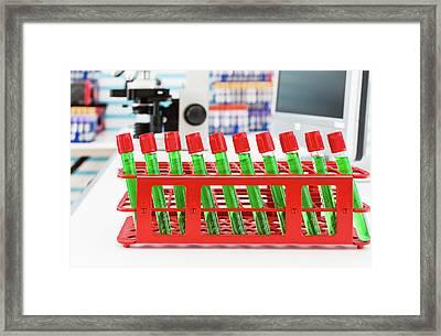 Samples In Test Tubes Framed Print by Wladimir Bulgar