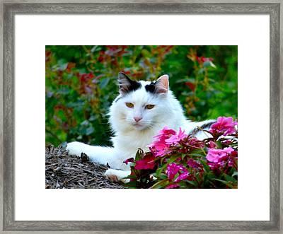 Sampson Framed Print