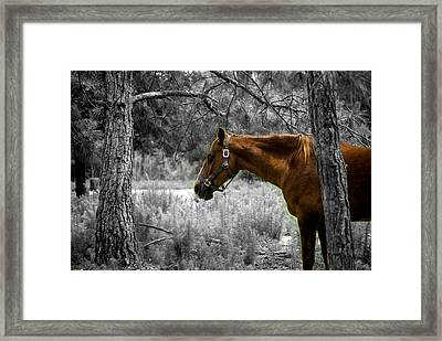 Samson On A Stroll Framed Print