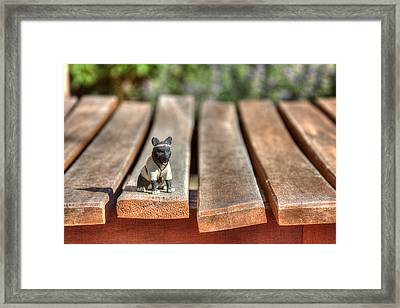 Framed Print featuring the photograph Samurai Pooch by Dave Garner