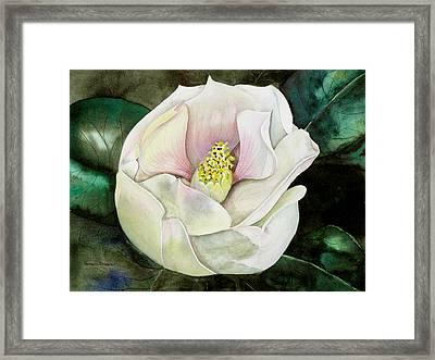 San Diego S Magnolia Framed Print
