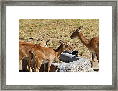 San Diego Zoo - 1212101 Framed Print by DC Photographer