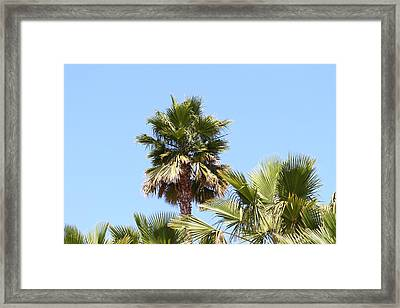 San Diego Zoo - 1212130 Framed Print by DC Photographer