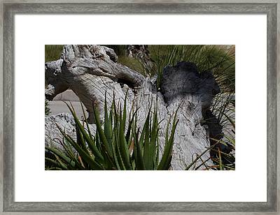 San Diego Zoo - 1212156 Framed Print by DC Photographer