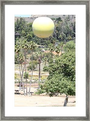 San Diego Zoo - 1212170 Framed Print by DC Photographer