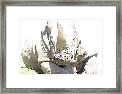 San Diego Zoo - 1212180 Framed Print by DC Photographer