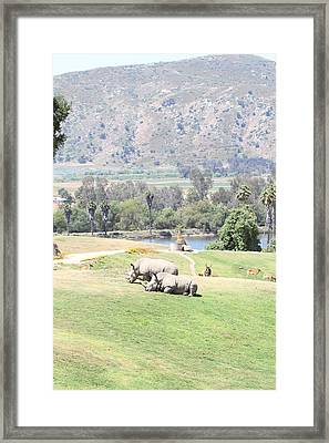 San Diego Zoo - 1212192 Framed Print by DC Photographer