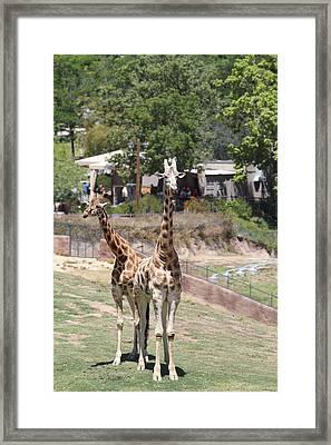 San Diego Zoo - 1212193 Framed Print