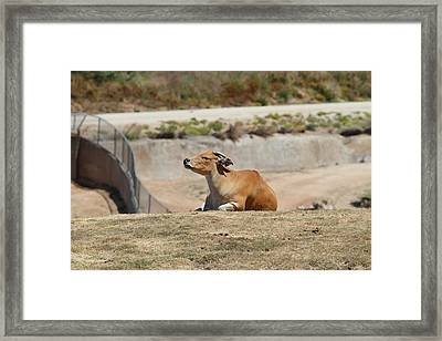 San Diego Zoo - 1212198 Framed Print by DC Photographer