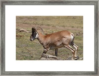 San Diego Zoo - 1212210 Framed Print