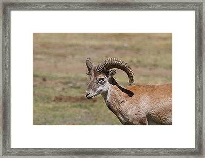 San Diego Zoo - 1212211 Framed Print by DC Photographer