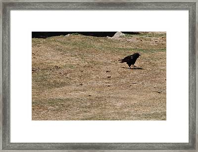 San Diego Zoo - 1212218 Framed Print by DC Photographer