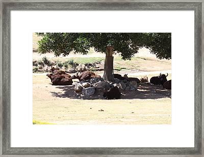 San Diego Zoo - 1212233 Framed Print by DC Photographer