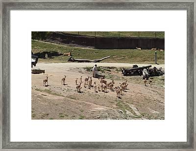 San Diego Zoo - 1212255 Framed Print