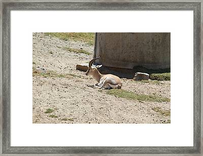 San Diego Zoo - 1212256 Framed Print by DC Photographer