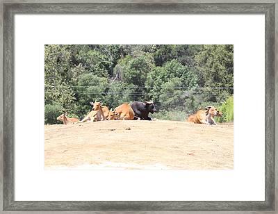 San Diego Zoo - 1212269 Framed Print by DC Photographer