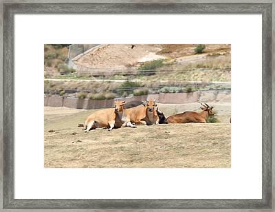 San Diego Zoo - 1212273 Framed Print by DC Photographer