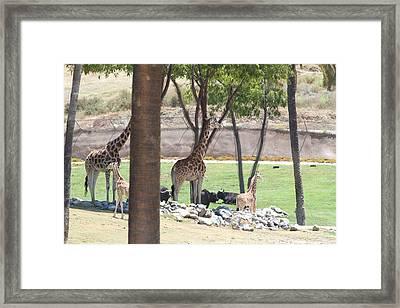 San Diego Zoo - 1212296 Framed Print by DC Photographer