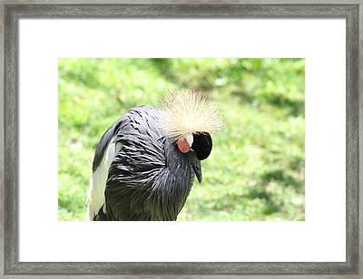 San Diego Zoo - 1212300 Framed Print