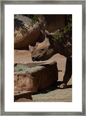 San Diego Zoo - 121231 Framed Print by DC Photographer