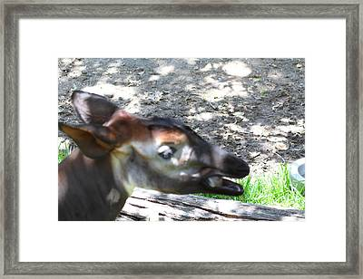San Diego Zoo - 1212332 Framed Print by DC Photographer