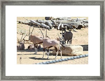 San Diego Zoo - 121272 Framed Print