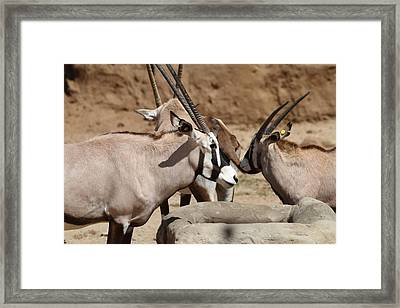 San Diego Zoo - 121275 Framed Print by DC Photographer