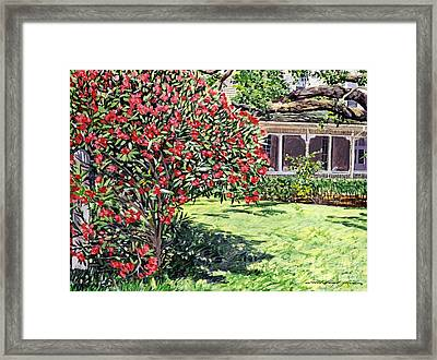 San Francisco Oleander Framed Print by David Lloyd Glover