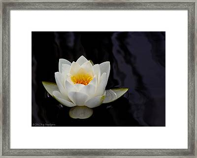 San Francisco Water Lily Framed Print by Bruce Lundgren