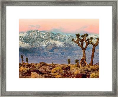 San Gorgonio Mountain From Joshua Tree National Park Framed Print by Bob and Nadine Johnston