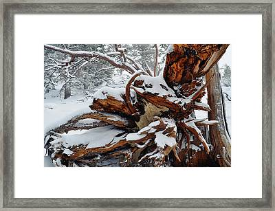 Framed Print featuring the photograph San Jacinto Fallen Tree by Kyle Hanson