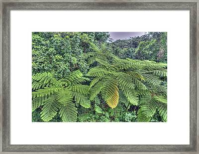 San Juan Peurto Rico Rainforest Framed Print by Willie Harper