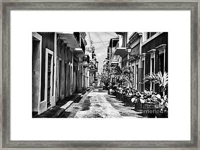 San Juan Street Plants Framed Print by John Rizzuto