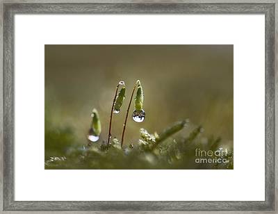 Sanctuary Of Light Framed Print by Maria Ismanah Schulze-Vorberg