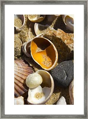 Sand Covered Shells Framed Print by Eugene Bergeron
