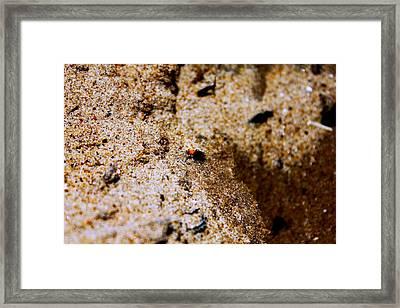 Sand Critter Framed Print by Sheryl Burns