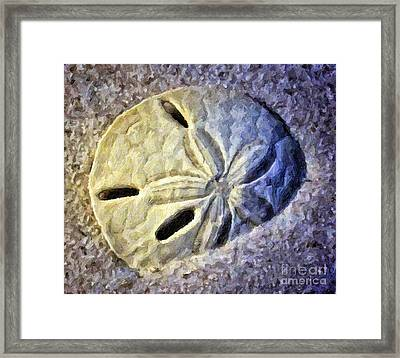 Sand Dollar 1 Framed Print