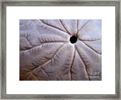 Sand Dollar 2 Framed Print by Vicki Maheu