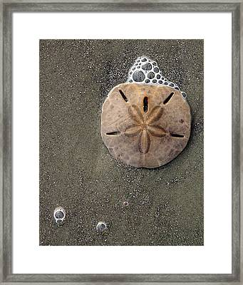 Framed Print featuring the photograph Sand Dollar by Tom Romeo