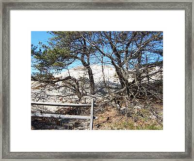 Sand Dune With Trees Framed Print by Catherine Gagne