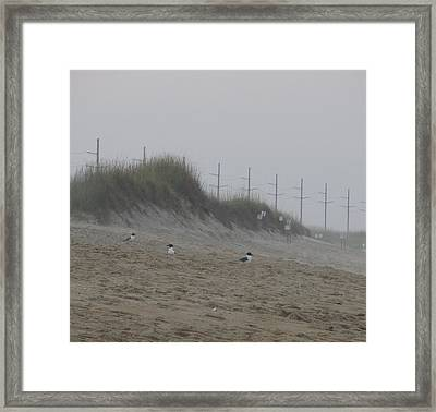 Framed Print featuring the photograph Sand Dunes And Seagulls by Cathy Lindsey