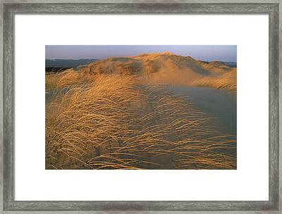 Sand Dunes Covered With Beach Grass Framed Print by Norbert Rosing