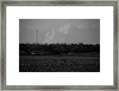 Sand Hill Cranes With Nebraska Thunderstorm Framed Print