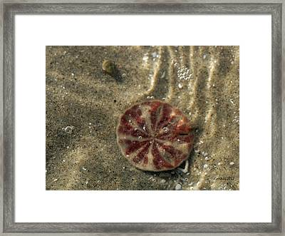 Framed Print featuring the photograph Sand Peso by Dick Botkin