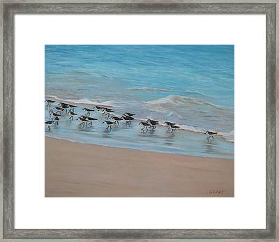 Sand Piper On Parade Framed Print