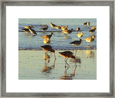 Sand Pipers Framed Print