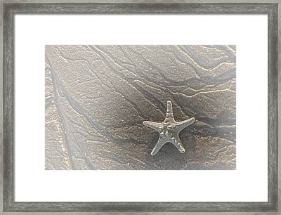 Sand Prints And Starfish II Framed Print by Susan Candelario
