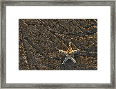 Sand Prints And Starfish  Framed Print by Susan Candelario